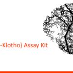 Human Soluble Alpha Klotho ELISA Kit