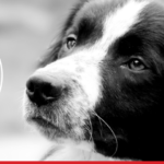 Canine CRP – Randox Veterinary Diagnostic Solutions