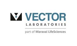ls-vector