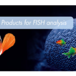 ZytoVision FISH probe for ROS1 translocations