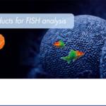 ZytoVision Unique* in FISH and CISH – ZytoLight SPEC USP6 Dual Color Break Apart Probe